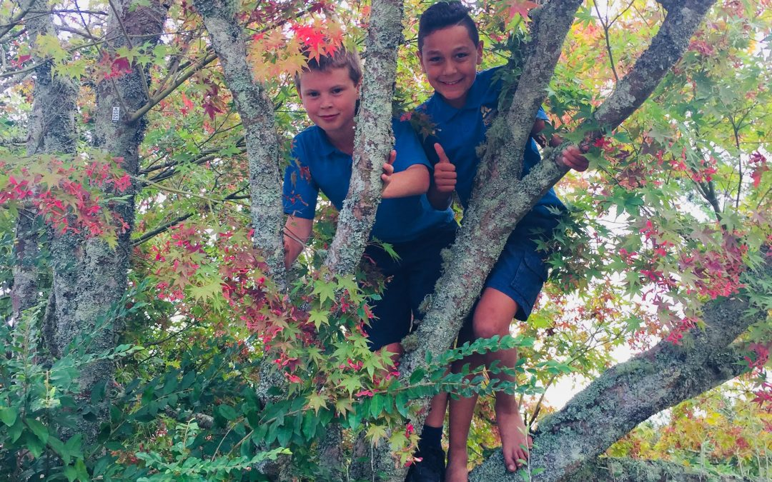 Bring Tree Climbing Back in Schools